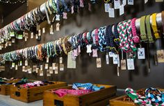 collars at Downtown Dogs