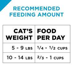 Iams Proactive Health Kitten Dry Cat Food 7 Pounds Cat Food