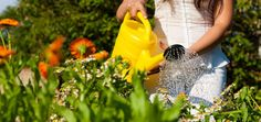 3 Tips for Growing a Perfect Summer Garden - In the Garden - Mother Earth Living Blooming Plants, Blooming Flowers, Flowering Plants, Late Summer Flowers, Ways To Be Happier, Garden Care, Summer Garden, Summer Diy, Garden Planning