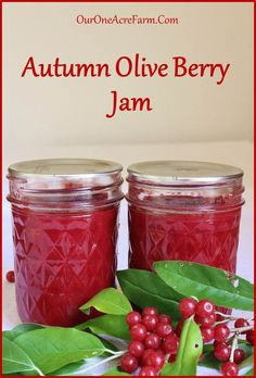 Autumn olive jam, made with an edible wild berry you can forage, and why you should make it.