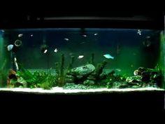 54 Best Freshwater Aquarium Ideas Images Planted Aquarium