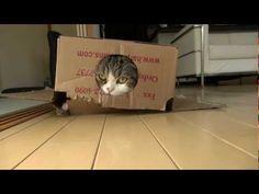 これはすごい(笑)!ロボニャンと化したネコ、さらにもう1つの箱と合体する | BUZZmag