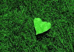 green heart in green grass