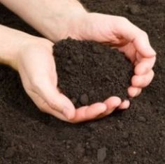 Sterilizing potting soil will increase that chances of growing healthy plants, starting healthy seeds and propagating cuttings. Many small plants and seedlings require sterilized soil to avoid diseases and parasites that may harm their tender parts...