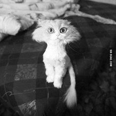 My GF's cat got shaven, now she looks like a cartoon-cat... - 9GAG