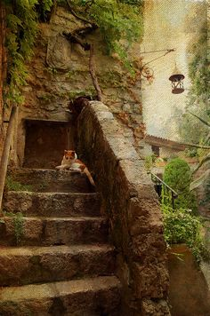 Noon Rest On The Stairs. Eze. France by Jenny Rainbow fine art prints for home decor. This lovely scene photographed in Eze, French medieval town in Southern France at lazy midday time and processed with texture for painterly look. This photo available as Fine Art Print (framed, canvas, metal, acrylic) or Home Decor Product (Throw Pillow, Duvet Cover or Shower Curtain).  #JennyRainbowFineArtPhotography