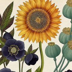 Cultivated Flowers www.katie-scott.com/shop #botanicum
