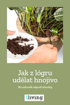 Hydrangea, Garden, Plants, Garten, Lawn And Garden, Hydrangeas, Gardens, Plant, Gardening