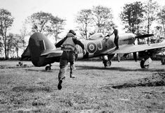 A pilot of No. 175 Squadron RAF scrambles to his waiting Hawker Typhoon Mk IB fighter-bomber at Le Fresne-Camilly in Normandy 24 July Ww2 Aircraft, Military Aircraft, Photo Avion, Hawker Typhoon, Ww2 Photos, Ww2 Pictures, Photographs, History Online, Ww2 Planes