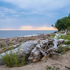 """""""Civilization makes us forget how to survive, for all primal needs have been secured. But no one teaches you how to survive in civilization. . . . . . #beach #landscape #lakehuron #roadtrip #travelgram #hiking #summer #artofvisuals #photooftheday #hypebeast #theimaged #agameoftones #passionpassport #folkgood #socality #adventure #realestate#trance #beautifuldestinations #pursuepretty#design #way2ill #moodygrams #illgrammers #earthpix #peoplescreatives #global_hotshotz #exploreeverything…"""