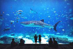 Georgia Aquarium | 8 Fun Things to do in Atlanta | Travel City Guide | via @Just1WayTicket
