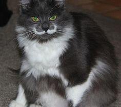 All Newest - Pixdaus | GRUMPY CAT By: Bob21