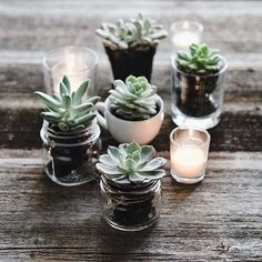 It's going to be another foggy grey day around here, so I'm sharing one last image of my teeny tiny succulents and then I promise to move on :) . I'll be heading to my first Christmas craft sale tomorrow... what better way to get on with the season! . Have a wonderful day/afternoon/evening everyone! . . #sunday_sundries #thestudioonline2016 . .