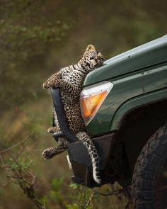 Nature Animals, Animals And Pets, Baby Animals, Funny Animals, Cute Animals, Wildlife Nature, Artic Animals, Woodland Animals, Beautiful Cats