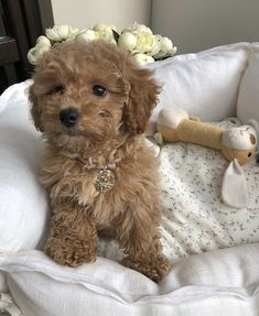 Cute Baby Dogs, Cute Little Puppies, Cute Dogs And Puppies, Baby Puppies, Doggies, Baby Animals Pictures, Cute Animal Pictures, Animals And Pets, Cute Funny Animals
