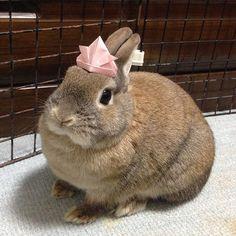 Will somebunny please love me?