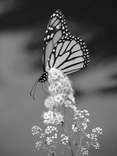 Noir et blanc                                                                                                                                                                                 Plus