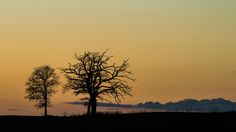 Two Trees and a bird by Cedric Favero on 500px
