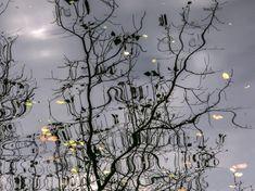 Reflection   Photo by Saba Khozoui — National Geographic Your Shot