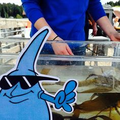 MC Drip is all about the sea life at the Gig Harbor Lighthouse 25th Anniversary.