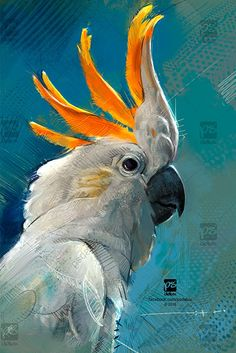 20161122 Cockatoo Bird Psdelux by psdeluxe on DeviantArt Wildlife Paintings, Wildlife Art, Animal Paintings, Realistic Animal Drawings, Bird Drawings, Watercolor Bird, Watercolor Animals, Bird Artwork, Arte Horror
