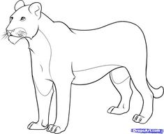 Female+Lion+Coloring+Pages | how to draw a lioness step 8