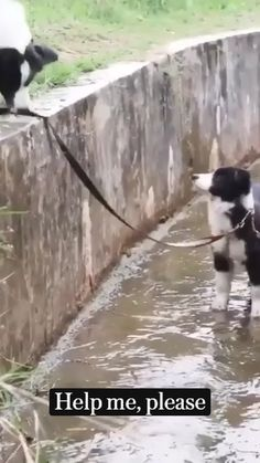 Cute Baby Dogs, Cute Funny Dogs, Cute Dogs And Puppies, Cute Funny Animals, Doggies, Cute Animal Videos, Cute Animal Pictures, Beautiful Dogs, Animals Beautiful