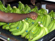 Make fruit fair! Labelling of Fairtrade bananas from Ghana