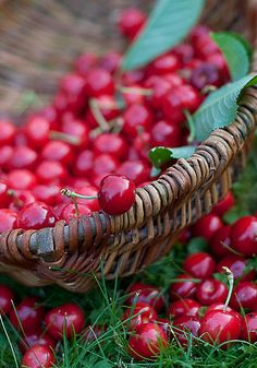 Beautiful crimson summer cherries. #food #cherries #fruit