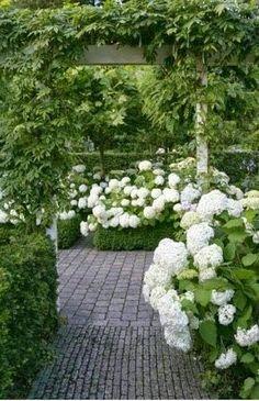 boxwood hydrangea and brick path :: classic garden combo
