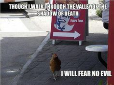 poor chicken.