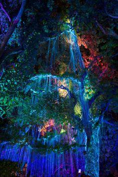 Avatar tree by Roll Kader on Fantasy Art Landscapes, Fantasy Landscape, Fantasy Artwork, Beautiful Landscapes, Anime Art Fantasy, Fantasy Places, Fantasy World, Avatar Tree, Fantasy Forest