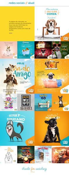 Projeto - Vida Pets on Behance