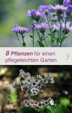 Willst Du einen pflegeleichten Garten? Hier Tipps, mit welchen Pflanzen das gelingt.