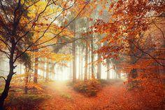 "landscapelifescape: ""Bavaria, Germany Crossroads by Kilian Schönberger """