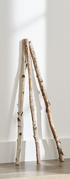 1000 images about birch trees on pinterest birches birch branches and branches