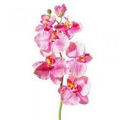 Paramit - Orchidea ružová 75 cm