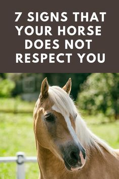 Wondering if you have your horse's respect? Here are 7 signs that you might still have some work to do. #HorseTraining #HorsebackRiding #HorseCare