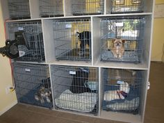 Doggy Waiting Area