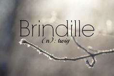 """Pronunciation: bran-dee-ye, with the """"n"""" being very nasal Brindille = twig (French) Beautiful French Words, Pretty Words, French Phrases, French Quotes, French Class, French Lessons, How To Speak French, Learn French, Foreign Words"""