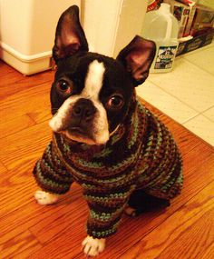 Iggy Pup in his new sweater by DIY Sara, via Flickr