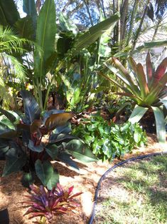 Shade Garden - tropical - landscape - miami - Gardening Angel