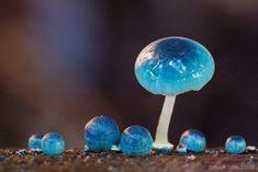 """Aesthetic Sharer ZHR on Twitter: """"Blue Mycena Mushroom… """""""