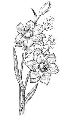 Галерея цветочных мотивов для вышивания . Обсуждение на LiveInternet - Российский Сервис Онлайн-Дневников Flower Drawing Tutorials, Flower Sketches, Silouette Cameo Projects, Pencil Drawings, Art Drawings, Daffodil Tattoo, Wood Burning Stencils, Free Adult Coloring, Nature Sketch