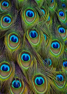 Feathered Jewels by Saffron Blaze, via Flickr