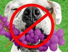 List of People Foods to Avoid Feeding Your Pets