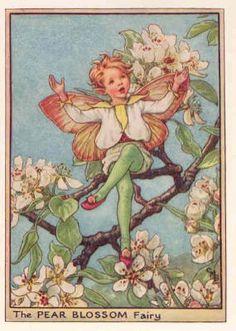 FLOWER FAIRIES: 1940's. PEAR BLOSSOM. Vintage Cicely BARKER PRINT