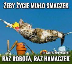 Raz robota, raz hamaczek!!! Motto, Good Morning, Haha, Humor, Memes, Funny, Animals, Polish Sayings, Buen Dia