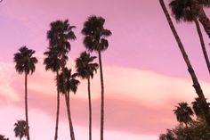 Palms Trees at Sunset