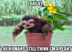 Image result for sloth memes